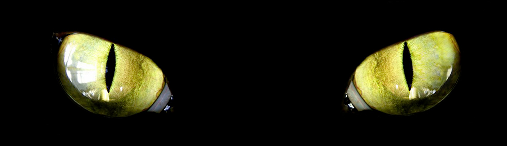 OneBlackCat